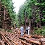 south-fork-nooksack-forest-management